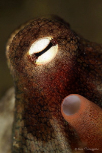 Close up with Octopus by Ken Thongpila 